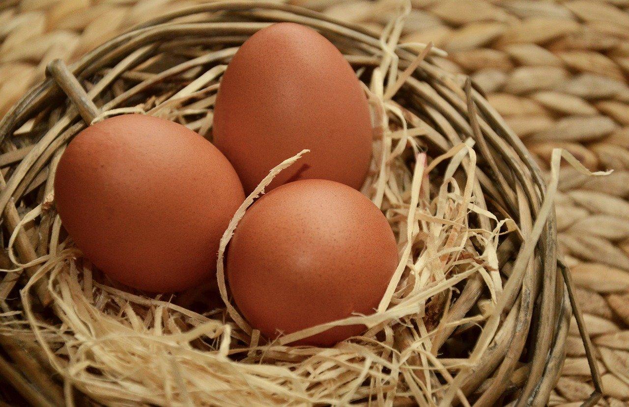 Barnevelder eieren